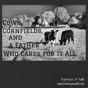 Cows, Cornfields,