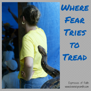Where Fear Tries to Tread