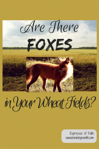 Are There Foxes in Your Wheat Fields