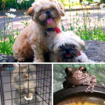 Five Pet Heartbeats